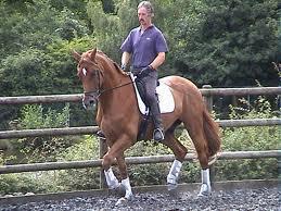 Maestro de equitación en Inglaterra